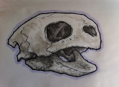 Sea Turtle Skull